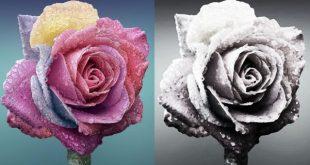 come disegnare una rosa istruzioni e immagini