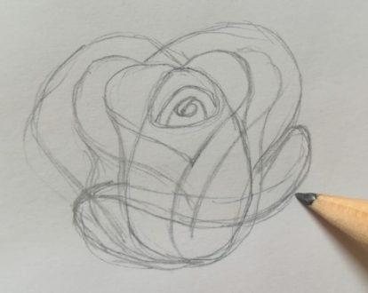 rose disegnate