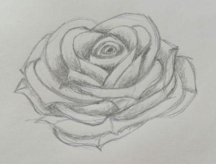 come disegnare una rosa aperta