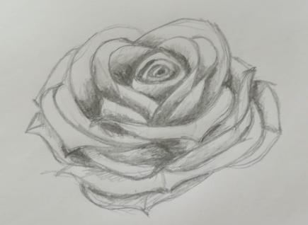 come disegnare una rosa facile