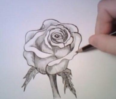 come si disegna una rosa