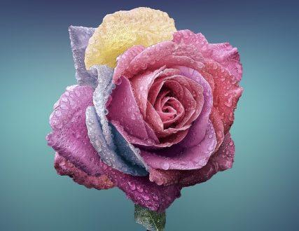 disegnare una rosa
